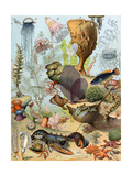 Life on the Sea Floor, Including Crustaceans and Molluscs Reproduction procédé giclée