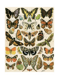 Butterflies and Moths Common to Europe Giclée-tryk