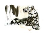 Arabian Leopard, 2008 Giclee Print by Mark Adlington