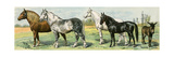 Horse Breeds: Belgian and Percheron Draft Horses, a Trotter, An Arabian, and a Donkey Giclee Print