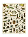 Insects, Including Beetles Giclee Print