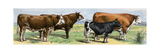 European Beef Cattle and a Dairy Cow Giclee Print