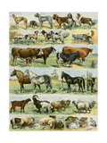 Dogs, Cats, Cattle, Horses, Goats, Sheep, Hogs, and Other Domesticated Animals Giclee Print