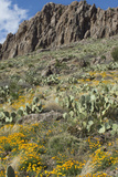Mexican Poppies and Other Chihuahuan Desert Plants in the Little Florida Mountains, New Mexico Photographic Print