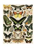 Butterflies and Moths not native to Europe Giclée-Druck