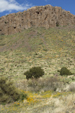 Little Florida Mountains in Rockhound State Park, Southern New Mexico Photographic Print