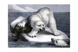 Polar Bear Protecting Its Seal Kill Photographic Print
