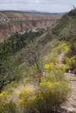 Trail Into Frijoles Canyon, Bandelier National Monument, New Mexico Photographic Print