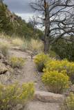 Trail Out of Frijoles Canyon, Bandelier National Monument, New Mexico Photographic Print