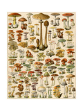 Varieties of Mushrooms Giclée-tryk