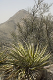 Yucca in the Organ Mountains, Southern New Mexico Photographic Print