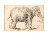 An Elephant Giclee Print by  Rembrandt Van Rhijn