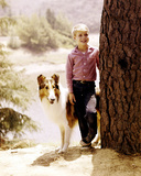 Jon Provost, Lassie (1954) Photo