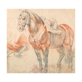 Saddled Horse Giclee Print by Pieter Paul Rubens