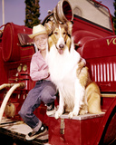 Jon Provost, Lassie (1954) Foto