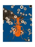 Orange Bug Photographic Print by Jan Weiss