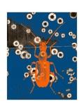 Orange Bug Photographic Print by Jan Weiss