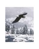 Free Flight (detail) Kunstdrucke von Daniel Smith