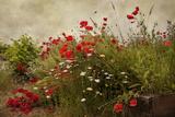 Jardín de amapolas Pósters por David Winston