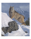 Austere Ascent (Lynx) Prints by Daniel Smith