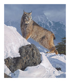 Austere Ascent (Lynx) Giclee Print by Daniel Smith