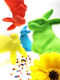 Rabbits, Flower, and Pills Photographic Print by Graeme Montgomery