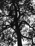 Tree Branches Photographic Print by Alex Cayley