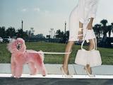 Pink Poodle Reproduction photographique par Arthur Belebeau