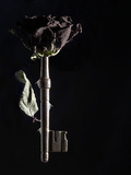 Dried Rose and Key Lámina fotográfica por Graeme Montgomery