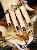 Cat and Rings Reprodukcja zdjęcia autor Graeme Montgomery