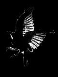 Bird Silhouette Photographie par Graeme Montgomery