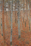 Gustav Klimt Forest of Beech Trees Plastic Sign Plastic Sign by Gustav Klimt
