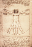 Leonardo da Vinci - Vitruvian Man, Proportions of the Human Figure Plastic Sign Wall Sign by  Leonardo da Vinci