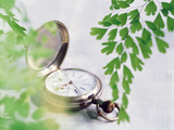 Close Up of Pocket Watch with Green Boughs Photographic Print by Green Light Collection