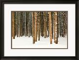 Lodge Poles Gerahmter Fotografie-Druck von Howard Ruby