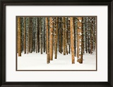 Lodge Poles Framed Photographic Print by Howard Ruby