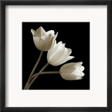 Three Tulips Indrammet giclee-tryk af Michael Harrison