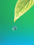 Droplet Falling From Green Leaf with Green And Teal Colored Background Photographic Print by Green Light Collection