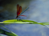 Dragonfly Perching on Grass Photographic Print by Green Light Collection