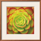Fiery Succulent Prints by Jan Bell