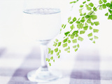 Drink Glass And Leaf Branch on Table Top Photographic Print by Green Light Collection