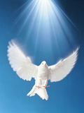 White Pigeon with Spread Wings in Blue Sky Photographic Print by Green Light Collection