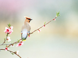 Rear View of Bird Perching on Branch Photographic Print by Green Light Collection