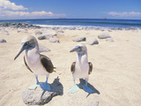 Birds Galapagos Is Ecuador Lámina fotográfica por Green Light Collection