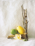 Mango, Woods And Flower, Studio Shot Photographic Print by Green Light Collection