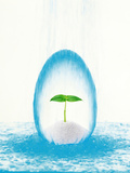 New Plat Growing in Crystal Egg with Rain Down on Crystal Egg in Water Photographic Print by Green Light Collection