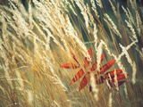 Red Leaf Stuck in Grass Photographic Print by Green Light Collection