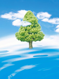 Single Tree with Clouds And Blue Sky Photographic Print by Green Light Collection