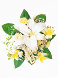 Arranged Flowers And Leaves on White Background Photographic Print by Green Light Collection
