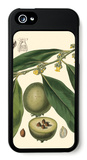 Exotic Foliage II iPhone 5 Case by  Vision Studio